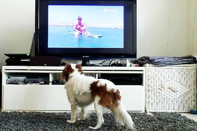dog-tv2