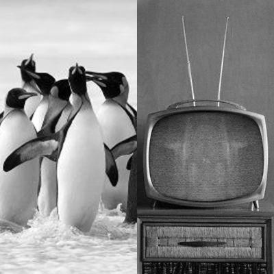 tv-pingc3bcinos