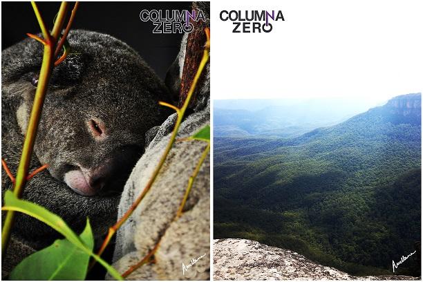 A la izda. Los koalas son una de las especies exclusivas de Australia y se encuentran en el norte, este y sur del país. A la dcha. La manta de vegetación verdeazulada explica el nombre de las Blue Mountains.