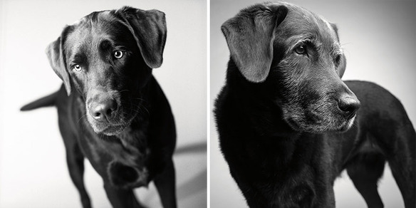 AMANDA JONES: DOG YEARS, FAITHFUL FRIENDS THEN & NOW